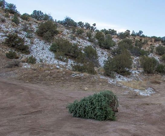Christmas tree discarded on public land in southern Colorado. (Photo: Royal Gorge Field Office, Bureau of Land Management)