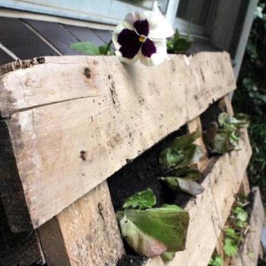 Garden growing in a wood pallet