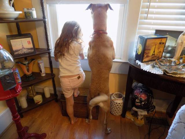 home defense canines