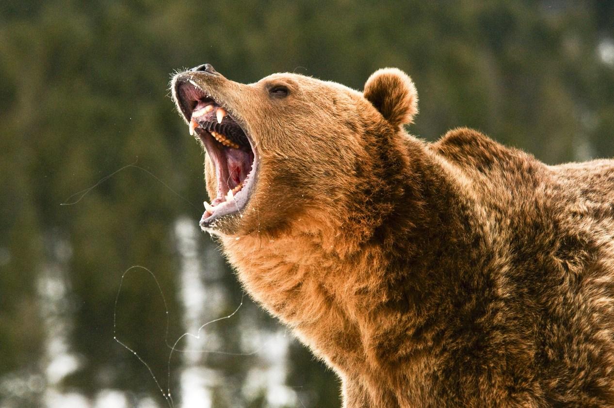 best bear country guns