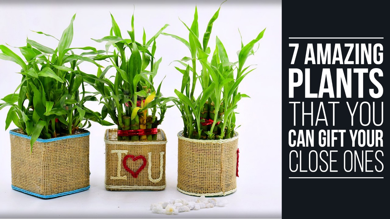 7-Amazing-Plants-that-You-Can-Gift-Your-Close-Ones