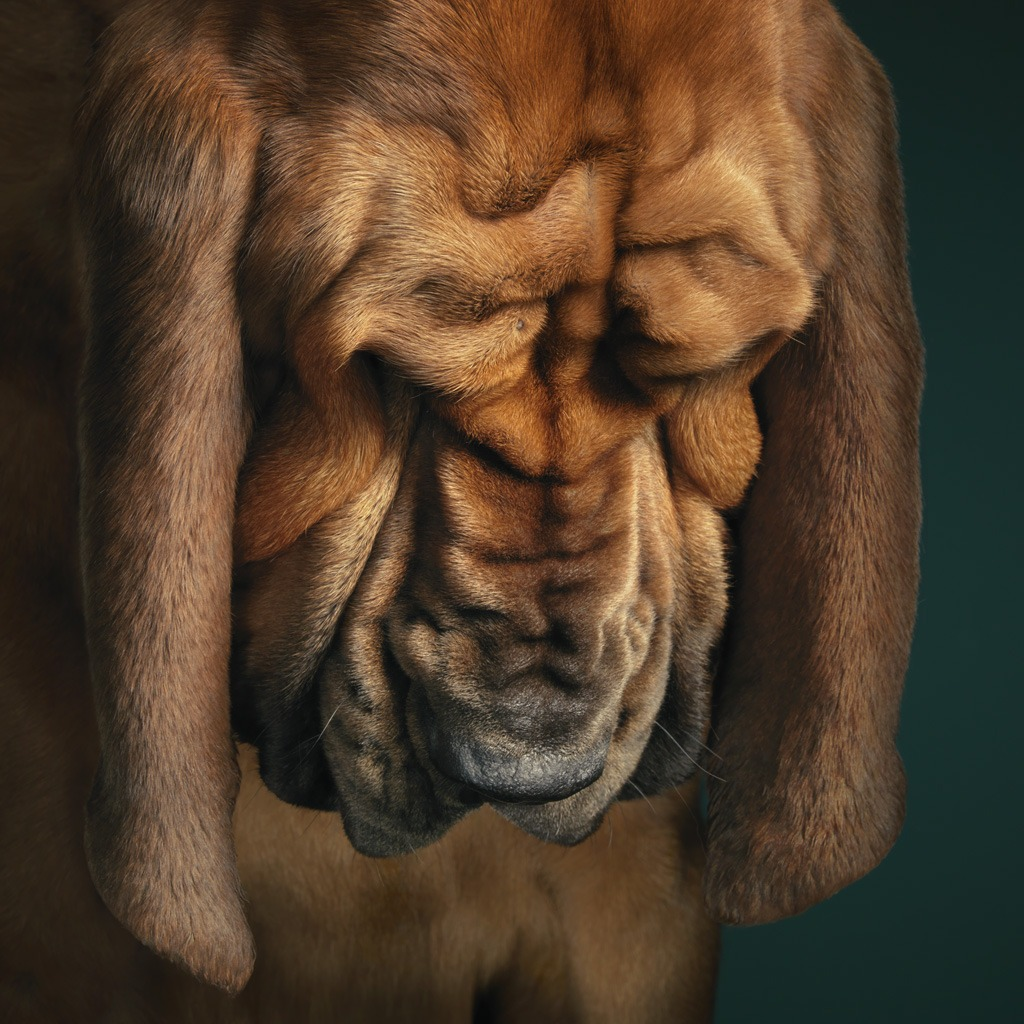 Dogs Gods by Tim Flach
