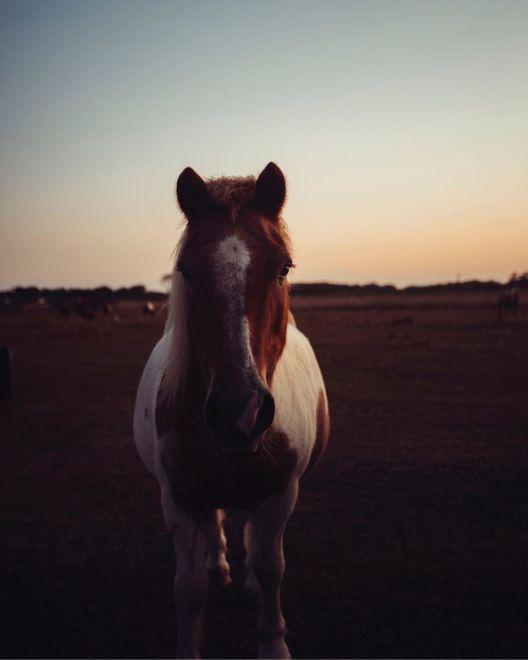 Max Beutler horse calming image