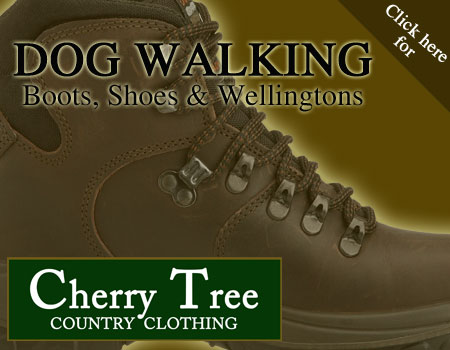Dog walking boots