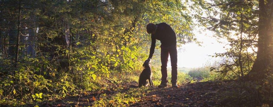 10 top dog walks in north wales