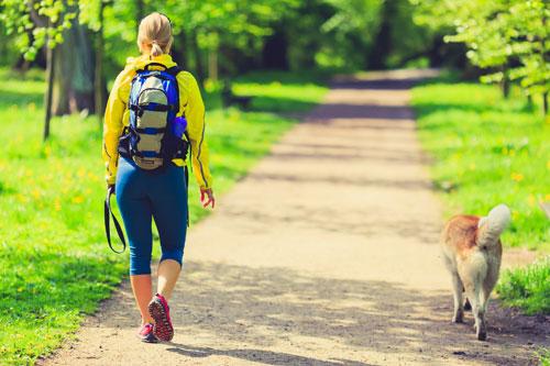 north wales dog walks