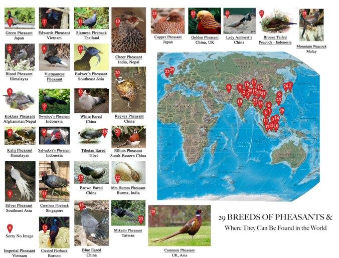 29 breeds of pheasants
