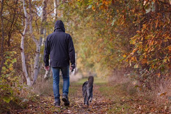 taking your dog walking