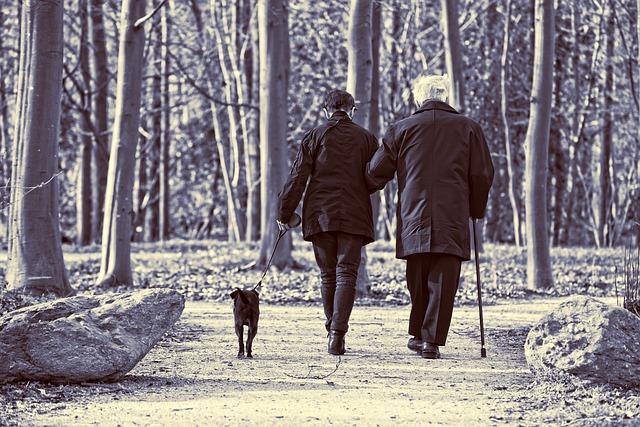 dog walking calories