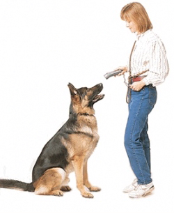 lens15412551_1289771924dog_training_shock_collar-1