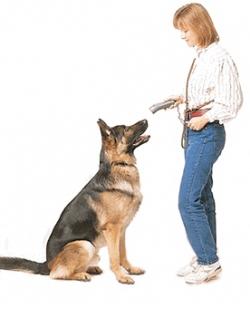 lens15412551_1289771924dog_training_shock_collar-1