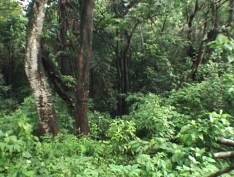 forest monsoon