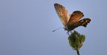 Schmetterling auf La Gomera