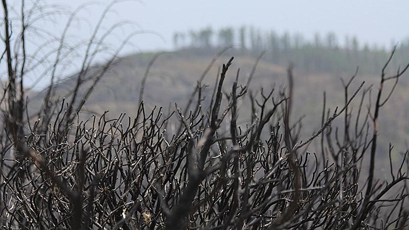 Verbrannte Äste auf La Gomera