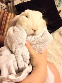 I'm a bunny burrito