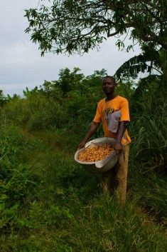 A cacao farmer in Ghana. Photo by: Christian Bunn / CIAT
