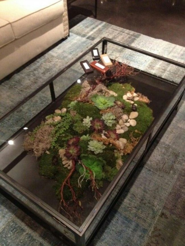 5 650x865 - Sukulent Moved To The Table! Coffee Table Terrarium Made