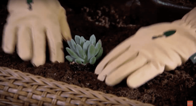 Teraryum Sehpa Asama 13 min 650x352 - Sukulent Moved To The Table! Coffee Table Terrarium Made