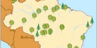 Satu bagian dari peta proyek REDD di Brazil.