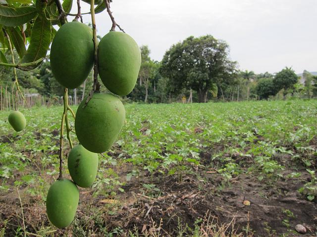 Bangladesh towards Sustainable Food Security