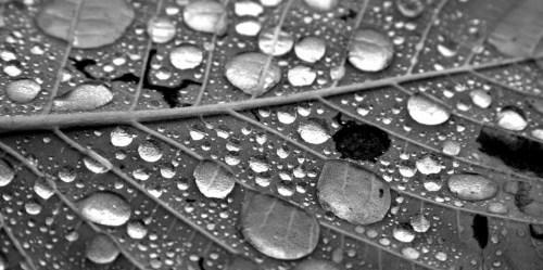 water-droplets-leaf