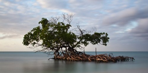 Hutan-hutan mangrove di Indonesia berperan penting dalam menghadapi perubahan iklim. Foto oleh Franck Vervial/flickr