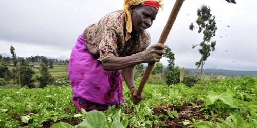 Beberapa persyaratan pertanian - tergantung dari tipe tanaman pangan - dapat bertubrukan dengan manfaat lingkungan hidup jangka panjang. Neil Palmer (CIAT)