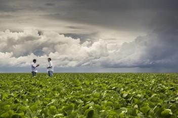 """Los impactos de la producción de biocombustibles varían, lo que dificulta generalizarlos con calificativos como """"malos"""" o """"buenos"""" para el medio ambiente, la economía y la sociedad. Matt Mawson"""