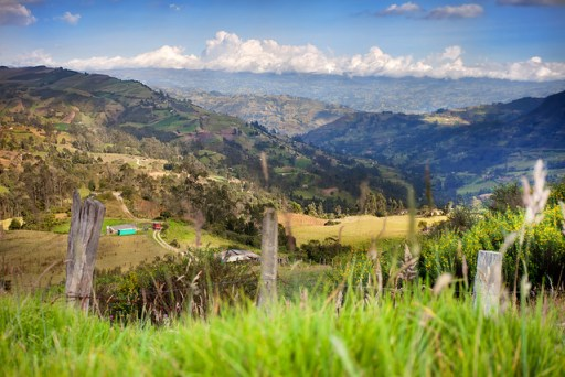 As much as 20 million hectares of Colombia's agricultural land is inefficiently used and could accommodate new plantations of oil palm. Christopher Schoenbohm