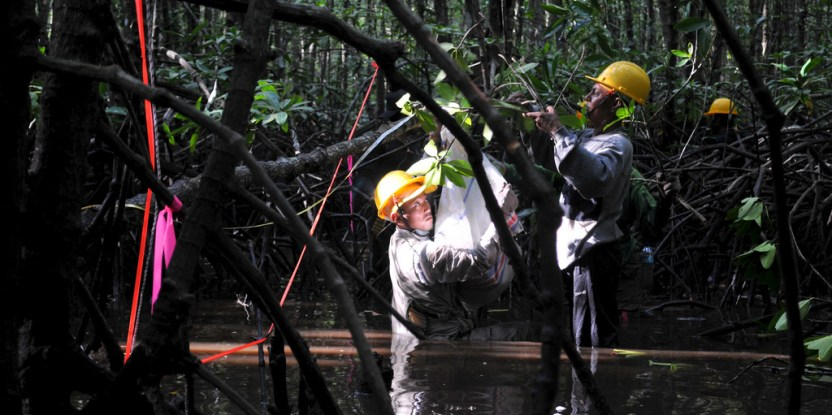 Mempelajari mangrove  itu kotor, namun penting untuk mengetahui lebih jauh mengenai ekosistem yagn unik ini. Kate Evans/CIFOR