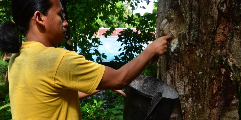 This  International Day of Forests, consider the human benefits of sustainable forestry.