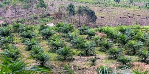 Lahan dibersihkan untuk perkebunan kelapa sawit di Kalimantan Timur. CIFOR/Mokhamad Edliadi