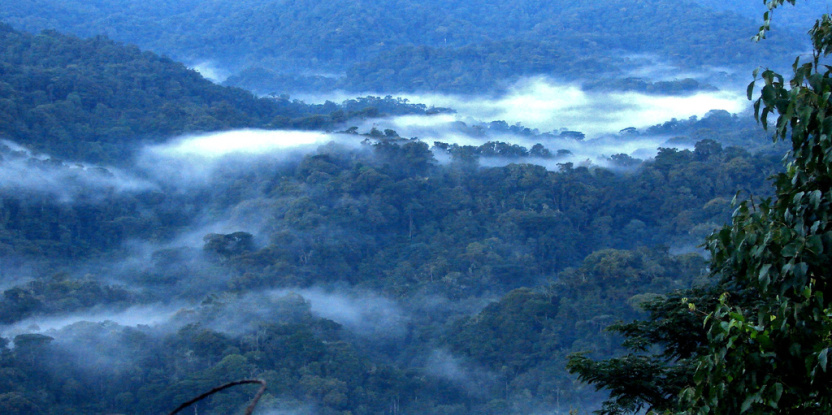 Bentang alam hutan tropis di Uganda. Douglas Sheil/CIFOR
