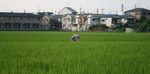 Jepang menunjukkan bahwa dimungkinkan untuk mencapai efisiensi industri, masyarakat berorientasi teknologi dan tetap mengelola sumber daya umum secara efektif. Dave Halberstadt