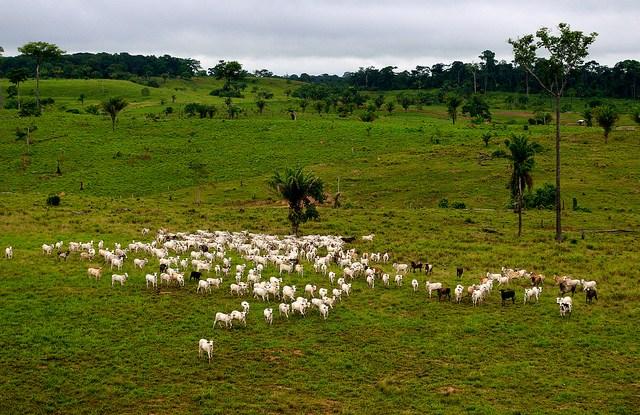Diantara risiko REDD + adalah ketidaksediaan pengguna hutan untuk berkomitmen jika mereka tidak yakin akan menerima setiap imbalan atas upaya mereka, pendapat dari para Pusat Penelitian Kehutanan Internasional. Gambar kredit: CIFOR / Kate Evans