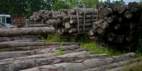 "Pakta perdagangan kayu Indonesia-EU adalah ""satu dari sejumlah inisiatif yang dimaksudkan menangani beragam tingkat masalah dan tantangan utama tata kelola hutan di Indonesia,"" ujar Andrew Wardell, Direktur Penelitian Hutan dan Tata Kelola, Pusat Penelitian Kehutanan Internasional. CIFOR/Sofi Mardiah"