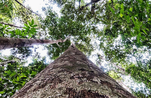 Before a community, company or state body can receive money to keep trees standing, it must be able to prove that it owns the forest and can keep others from cutting it down.