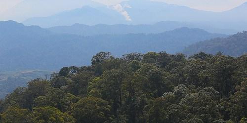 """""""Untuk secara efektif bekerja dalam suatu upaya pendekatan bentang alam, kita perlu berbagai jenis sains menjembatani kepentingan dari berbagai sektor,"""" kata Christine Padoch, direktur hutan dan perikehidupan di Pusat Penelitian Kehutanan Internasional. CIFOR/Kate Evans."""