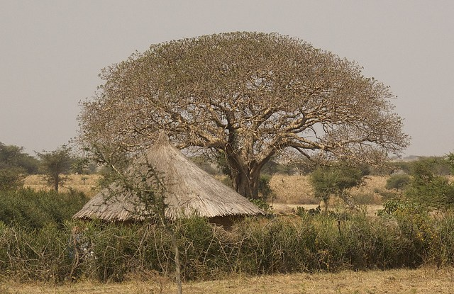 Habtemariam Kassa examines the challenges facing Ethiopia's forests as the country grapples with challenges.
