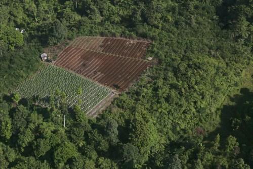 Vista aérea de un bosque y un paisaje agrícola cerca del Parque Nacional Halimun Salak, Java Occidental, Indonesia. Fotografía: Kate Evans/CIFOR