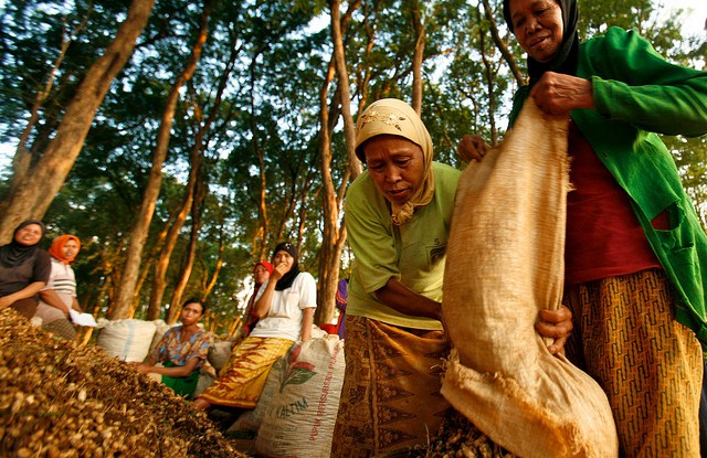 According to a new study, men and women contribute almost equally to the value of household income from unprocessed forest products such as timber, poles, fruits and mushrooms.