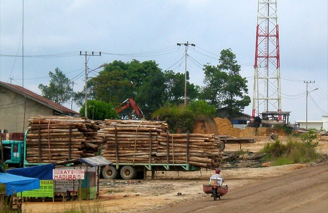 "The Indonesian government has issued regulations that call for ""joint management"" of forest plantations."