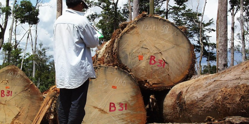 Regulations that took effect in the European Union (EU) in March 2013 prohibit the sale of illegally harvested timber and products made from illegal timber on the EU market.