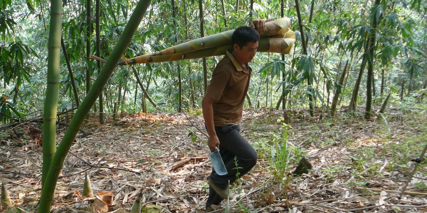 Petani bambu di China. Foto: Nick Hogarth/ CIFOR