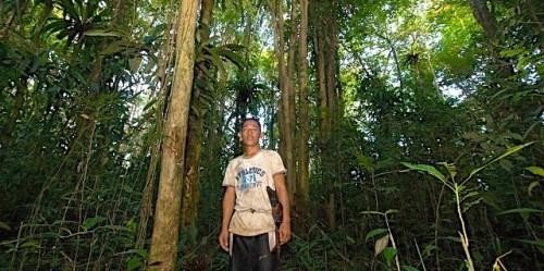 Penduduk-hutan di Kalimantan Barat, Indonesia. Hasil awal penelitian di Indonesia menujukkan bahwa penduduk hutan menemukan cara efisien memantau simpanan karbon di hutan, tetapi mereka seharusnya mendapat sesuatu dari pekerjaan itu jika hal ini ingin berlanjut. Foto CIFOR