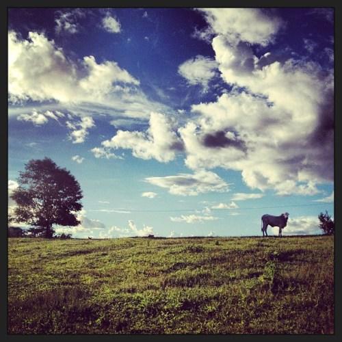 Ganadería en Acre, Brasil. La agricultura y la silvicultura climáticamente inteligentes son igualmente importantes para mejorar los medios de vida, fortalecer la resiliencia y reducir las emisiones. Fotografía de Kate Evans / CIFOR.