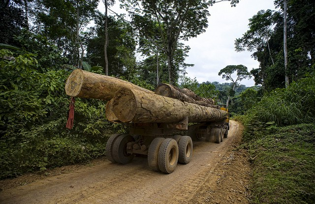 Research has found that the density of logging roads alone explain biomass loss to within 66 percent accuracy.