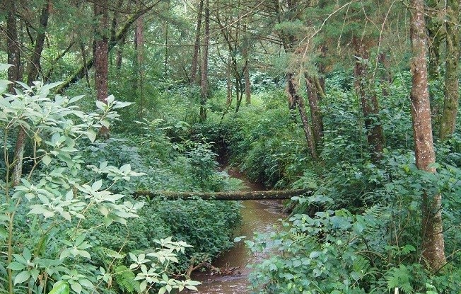 The Mau Forest complex serves as Kenya's single most important water catchment area.