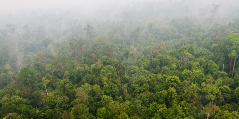 Haze from the forest fires blanket most parts of the landscape. Aulia Erlangga/ CIFOR