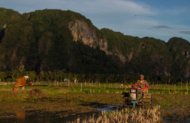 Plowing rice fields in South Sulawesi, Indonesia. CIFOR.